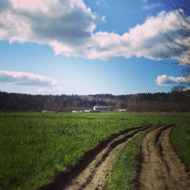 Spring Farm pic
