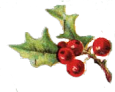 hollyberries